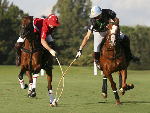 From a Game of Polo with a Headless Goat