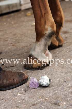 IMG 0695 